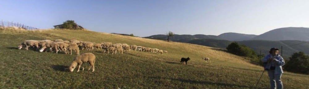 pecore e pastore a Cascia