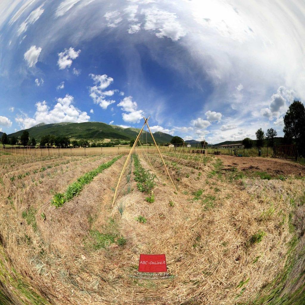 orto-sinergico-Panorama